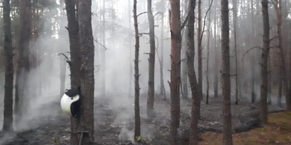 Kilka pożarów w ciągu tygodnia